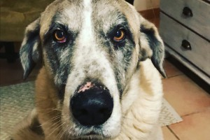 Maagtorsie bij mijn hond. Én wat zegt dat over mij?