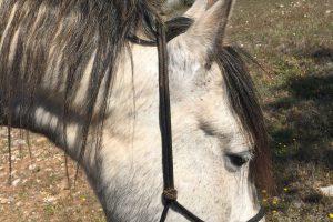 Met mijn handen in het haar maar dan niet meer die van mijn paard
