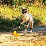 kat-rennen