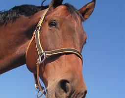 Je schaft een paard aan en deze doet niet wat je graag voor ogen hebt. Wat doe je?
